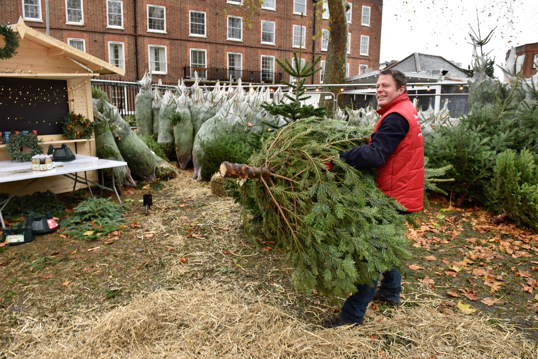 Christmas trees pop up in Little Brook Green and Bishop\'s Park | LBHF