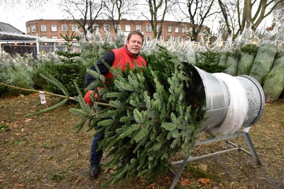 Buy a Christmas tree in a local park – and help a local school