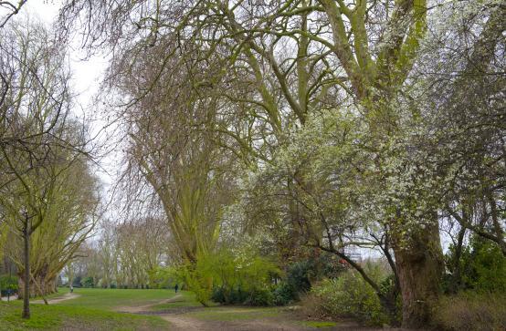 Bishop's Park in Fulham