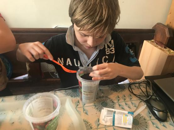Child sat at a school table planting seeds in a reused plastic container