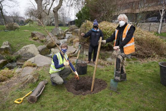 Five new cherry trees planted in Hammersmith Park