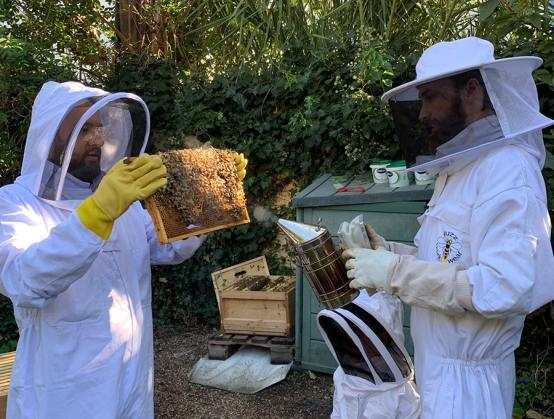 Two people in protective clothing looking at bees removed from a hive