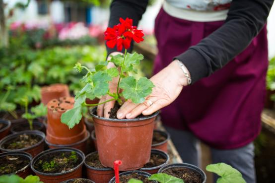 Now's the time to create borders, beds and pots in your garden or terrace