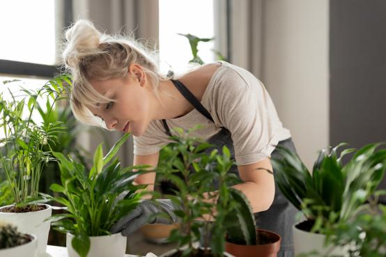 Urban gardeners can cut stress – even with no outdoor space