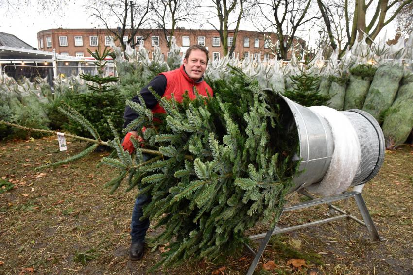 Hew Stevenson stood next to a device for netting real Christmas trees