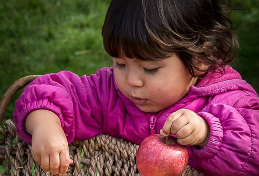 Young child lifting an apple out of a basket