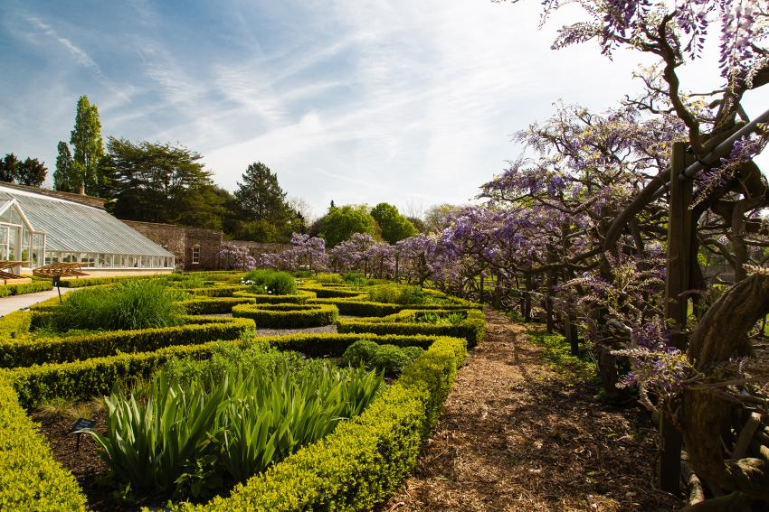 The botanic garden at Fulham Palace is 13 acres of stunning plantings, rare trees and a beautiful walled garden