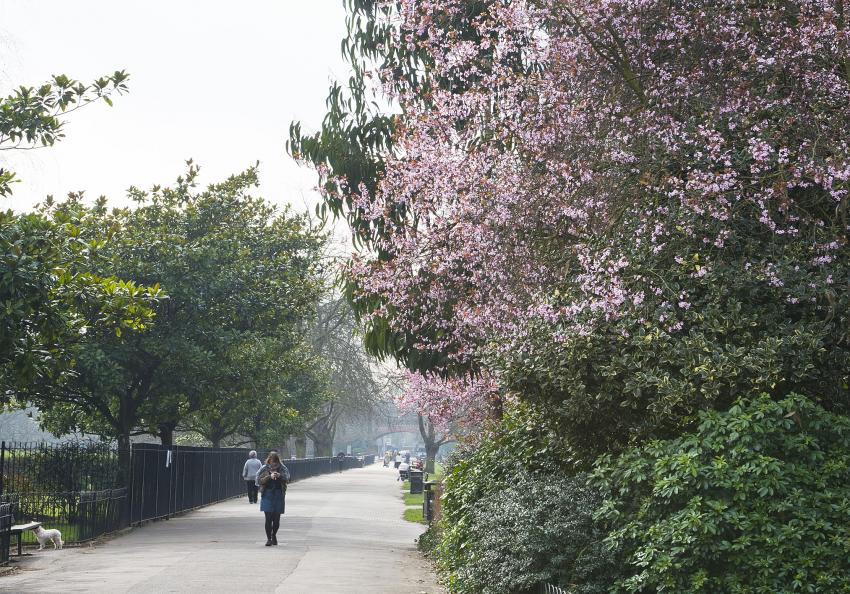 Avenues in Ravenscourt Park will get a boost of spring colour