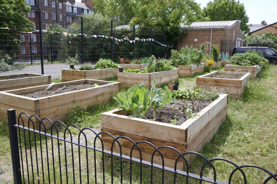 Raised flower beds sitting in allotment space on the West Kensington estate