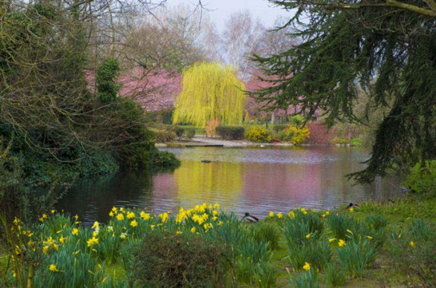 The pond at Ravenscourt Park