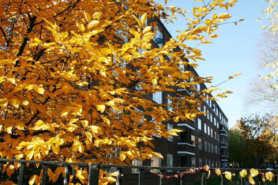 White City estate in autumn