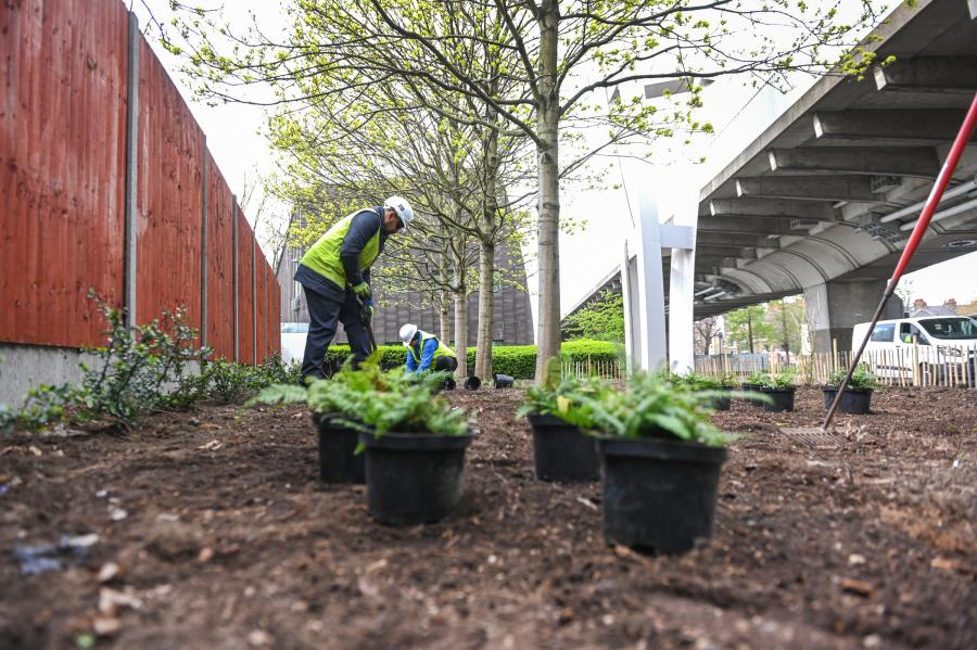 'Woodland garden' outside St Paul's School being planted