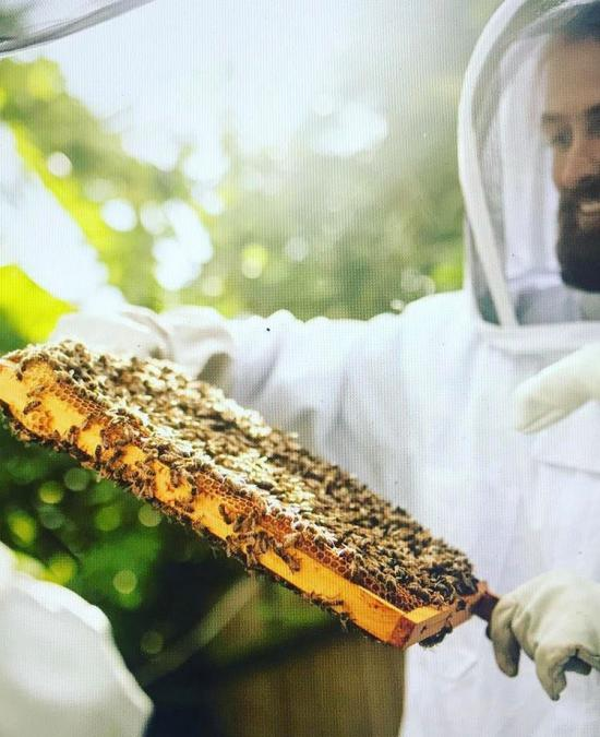 Ali Alzein holding some bees close to his face wearing full protective clothing