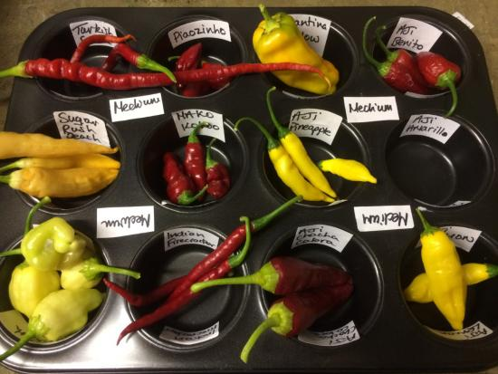 A selection of chillies on display with hand-written information labels