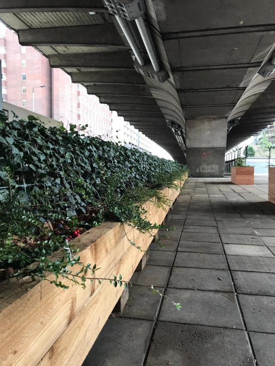 Planters underneath Hammersmith flyover
