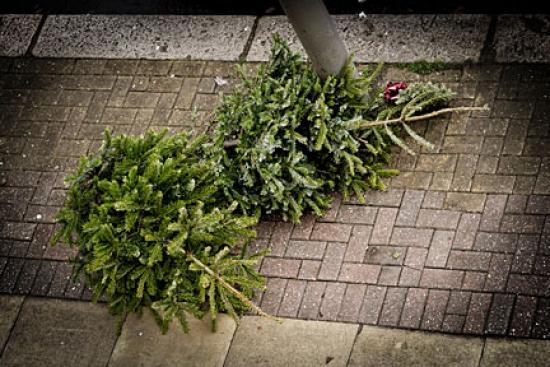 Christmas trees on the pavement