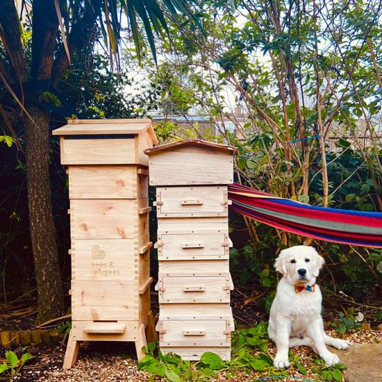 A dog sitting in a garden next to two wooden beehives